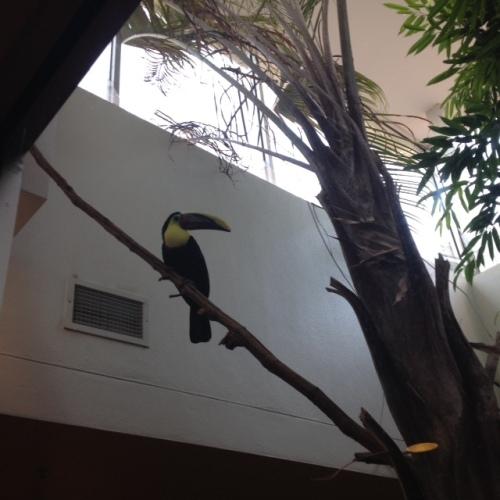 IMG_0233 pigeon