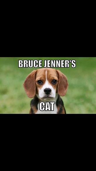 IMG_0104 Bruce Jenner's Cat