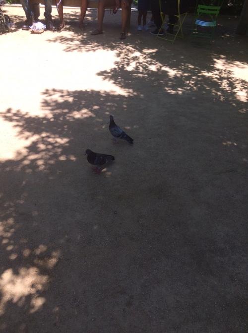 IMG_1096 Birds 3